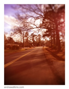woods drive florence sc