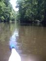 edisto river